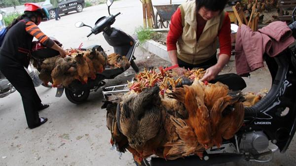 上海一老翁感染H7N9禽流感 曾买活鸡