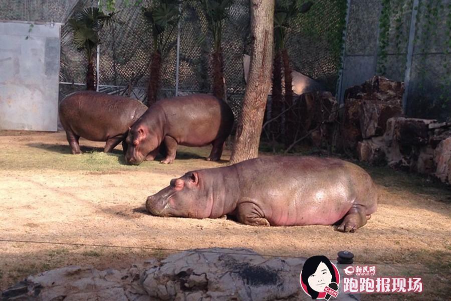 """动物园里来找""""马"""""""