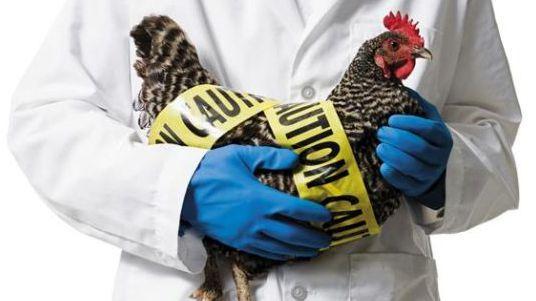浙江两日新增6人感染H7N9禽流感