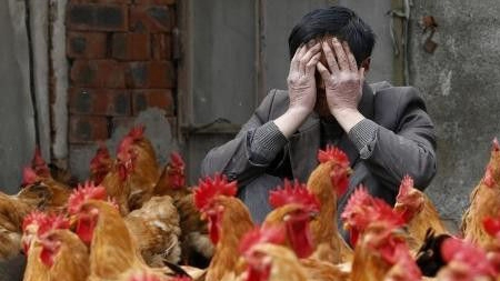 浙江今新增3人感染H7N9禽流感