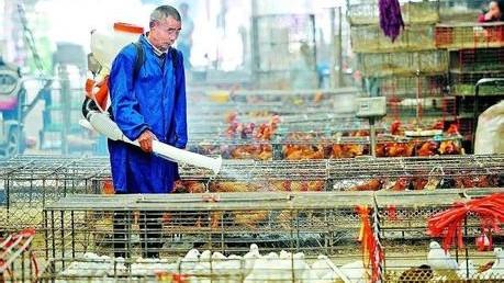 年初一起暂停 上海将逐步取消活禽交易