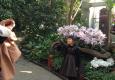 春节特别策划之植物园赏茶花