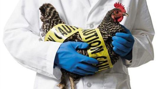 江苏新增1感染H7N9危重病例 曾买活鸡