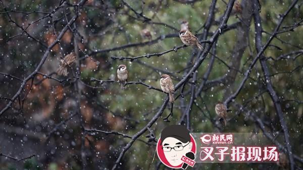 网友晒图:上海今迎马年第一场雪