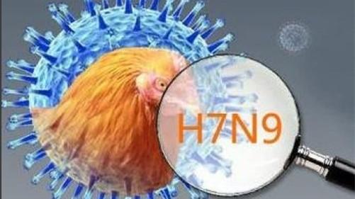 广东新增2例人感染H7N9禽流感病例