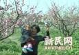 暗香浮动 首届上海梅花节今日正式开幕