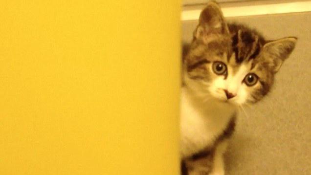 活体实验的视频.-手法残忍 美制药公司被曝养猫狗做活体实验