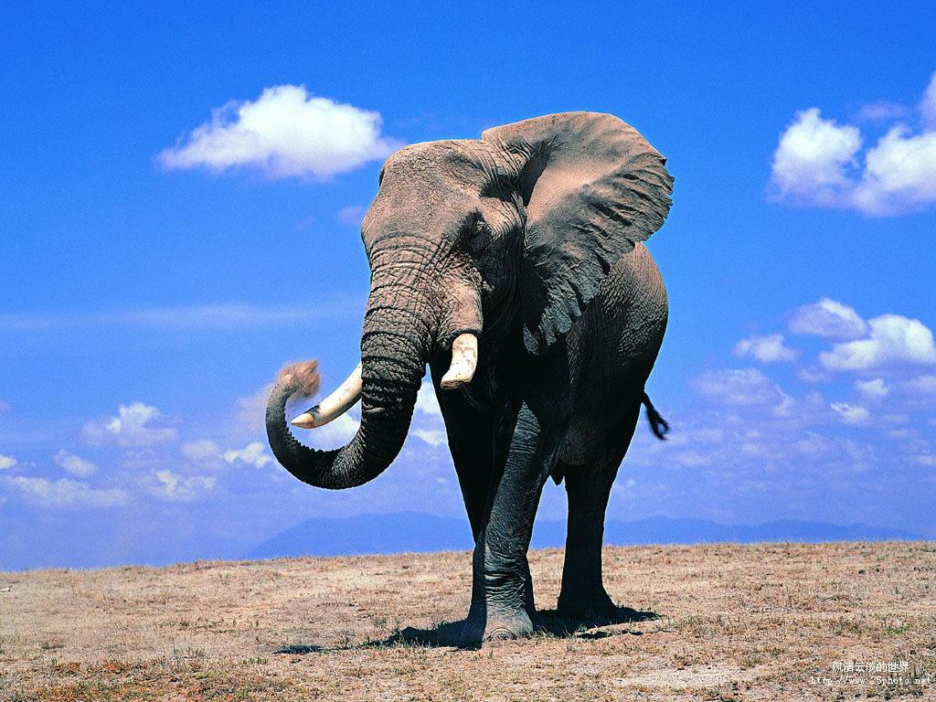 大象能从人类语音中辨别危险