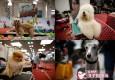 卖萌盛宴!3000余汪星人齐聚上海犬博会