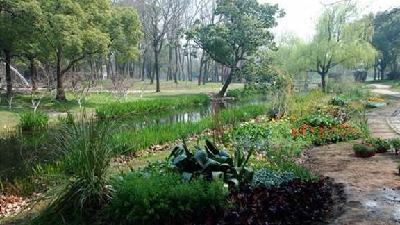 共青森林公园打造低碳节约最美河畔花境