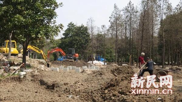 上海滨江森林公园杜鹃园改造 将融入水元素
