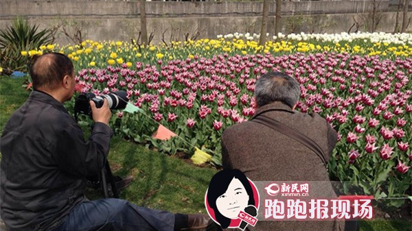 上海花展28日开幕 迷你花园享园艺乐趣