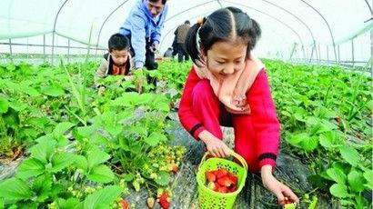 【新生活】上海及周边草莓最全采摘攻略,收藏走起!