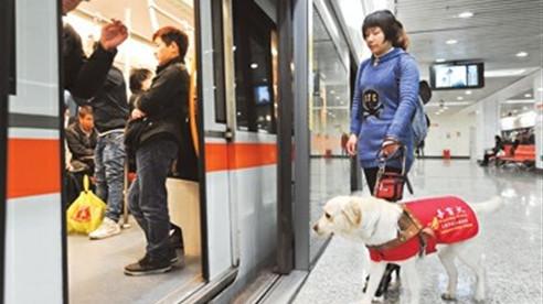 新规实施 申城导盲犬可名正言顺乘公交
