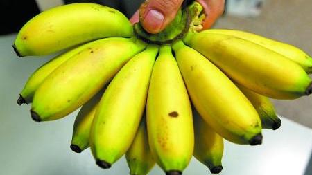 吃香蕉也会得艾滋?错!只传香蕉不传人
