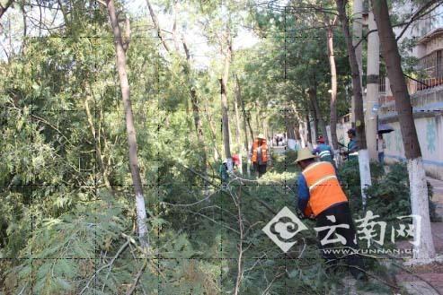 工作人员对枯死树枝进行清理