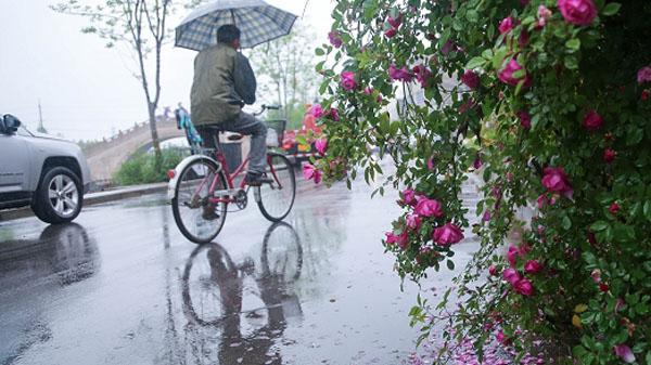 申城今起雨停