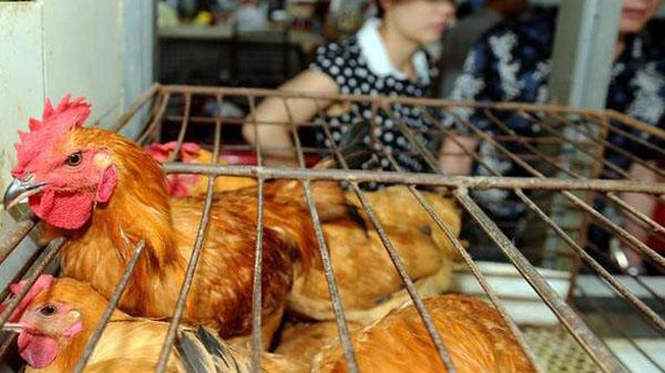 静安区拟不再开放活禽交易市场