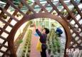 """""""一平米菜园""""扎根小区 环保设计令人惊叹"""