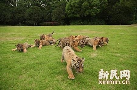 看图猜动物,来野生动物园跟虎宝宝一起过六一啦!