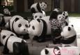 """百只环保""""大熊猫""""现身上海静安"""