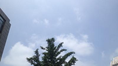 申城今起数天天气宜人:多云无雨 气温不高