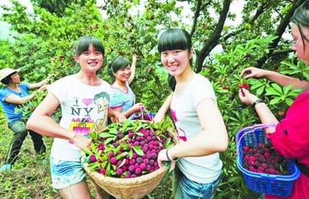 出游好去处!盘点上海周边杨梅采摘胜地