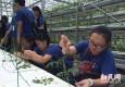 夏令营开进菜园子 中学生亲手体验水培植物蔬果种植