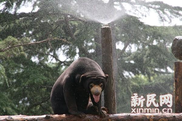 空调喷淋剃毛发 上海野生动物园百兽避暑有高招
