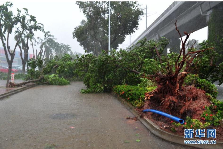 最强台风袭击海南!40年大树连根拔起!