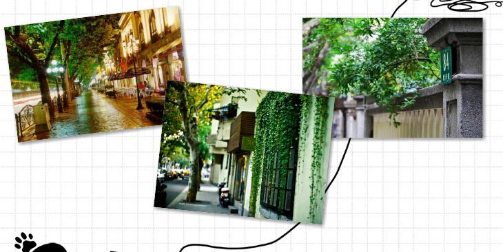 帮侬降温!上海十条清凉小马路