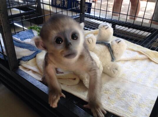 宝贝萌萌哒!上海动物园成功繁育200余种珍稀野生动物