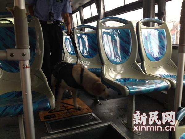 直击上海公共交通首次集中临检 特警警犬进车厢