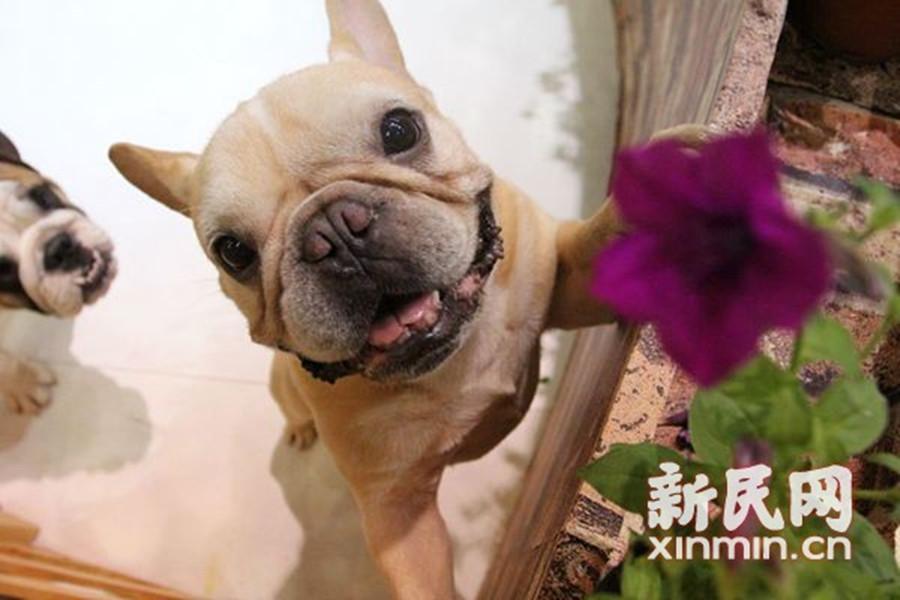 亚洲宠物展今闭幕 爱宠约会等明年