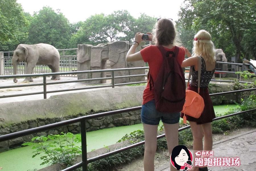 上海动物园庆祝亚洲象夫妻宝石婚!