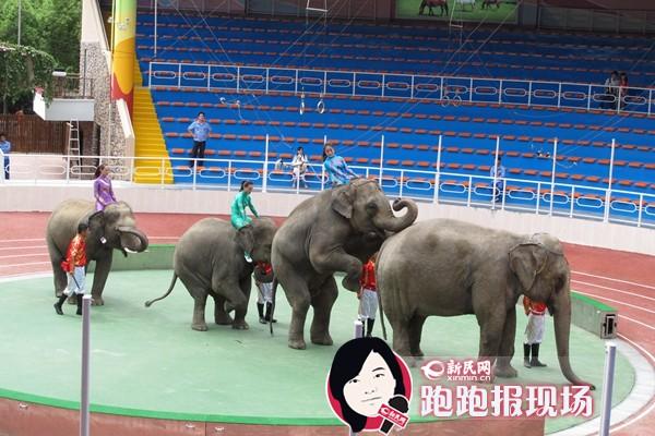 上海野生动物园动物武林大会开启 周六起门票半价