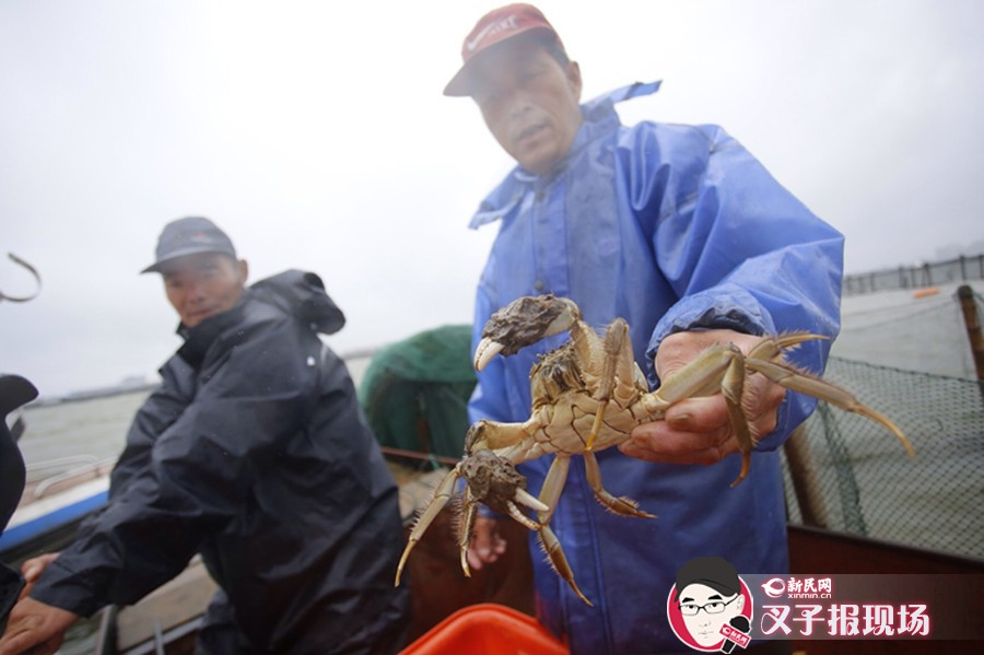 """阳澄湖大闸蟹今开捕 2300吨蟹静候""""吃货"""""""