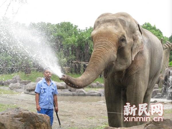 """象群比拼绝技迎国庆 老挝""""吉象""""正式与游客见面"""