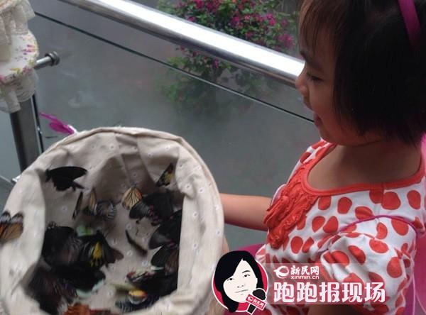 上海动物园蝴蝶展开幕 国庆节千只蝴蝶陪你过节