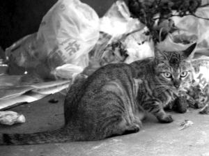 南京一小区流浪猫寄居车库跳蚤成灾