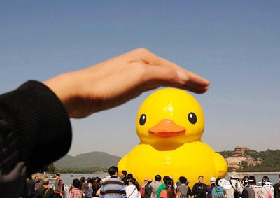 大黄鸭事件是什么_正版大黄鸭出没上海!各单位请注意!-侬好上海-新民网