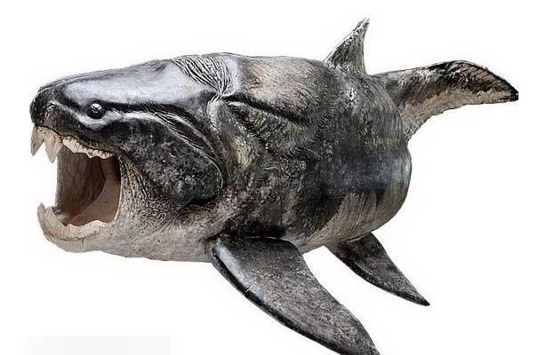 鱼的结构图片名称