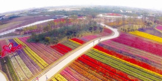 上海最美花园!80%的上海人还不知道这地方!
