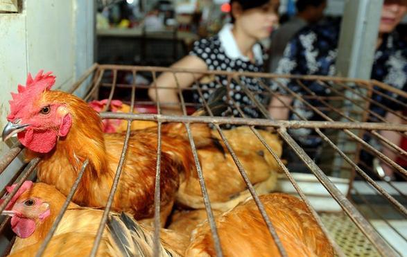 活禽交易明年延续季节性休市 正月初一至4月30日