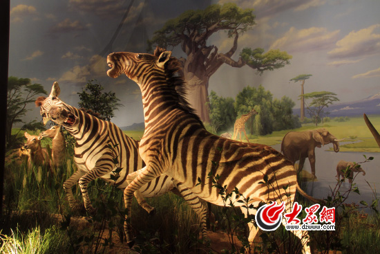 """""""非洲野生动物大迁徙展""""11月16日在省博开展"""