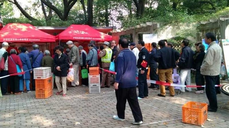 上海7家公园直销崇明浦东柑橘 从枝头到公园最快仅2小时