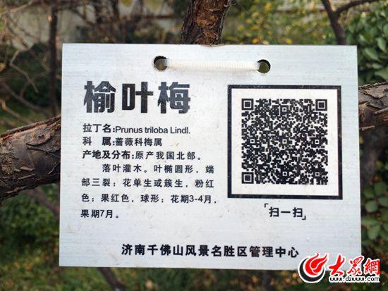樊思思)千佛山景区在树木标识牌上增加二维码方便