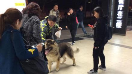 """地铁车站昨现""""不速之客""""  大型犬闯闸机"""