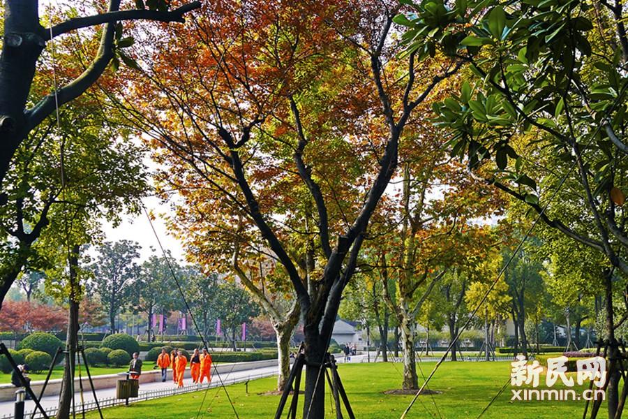 上海瑞金宾馆小花园秋日即景。在这个最美季节里,层次分明的植物色彩令人赏心悦目。徐正魁 摄