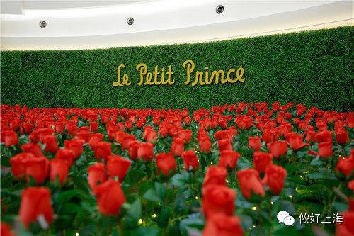 《小王子》超美实景玫瑰园空降魔都